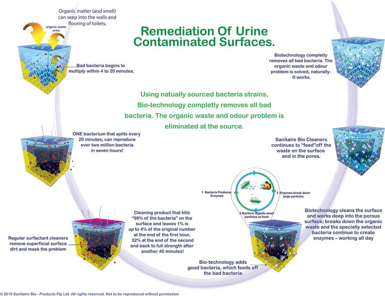 sanitaire-flow-chart